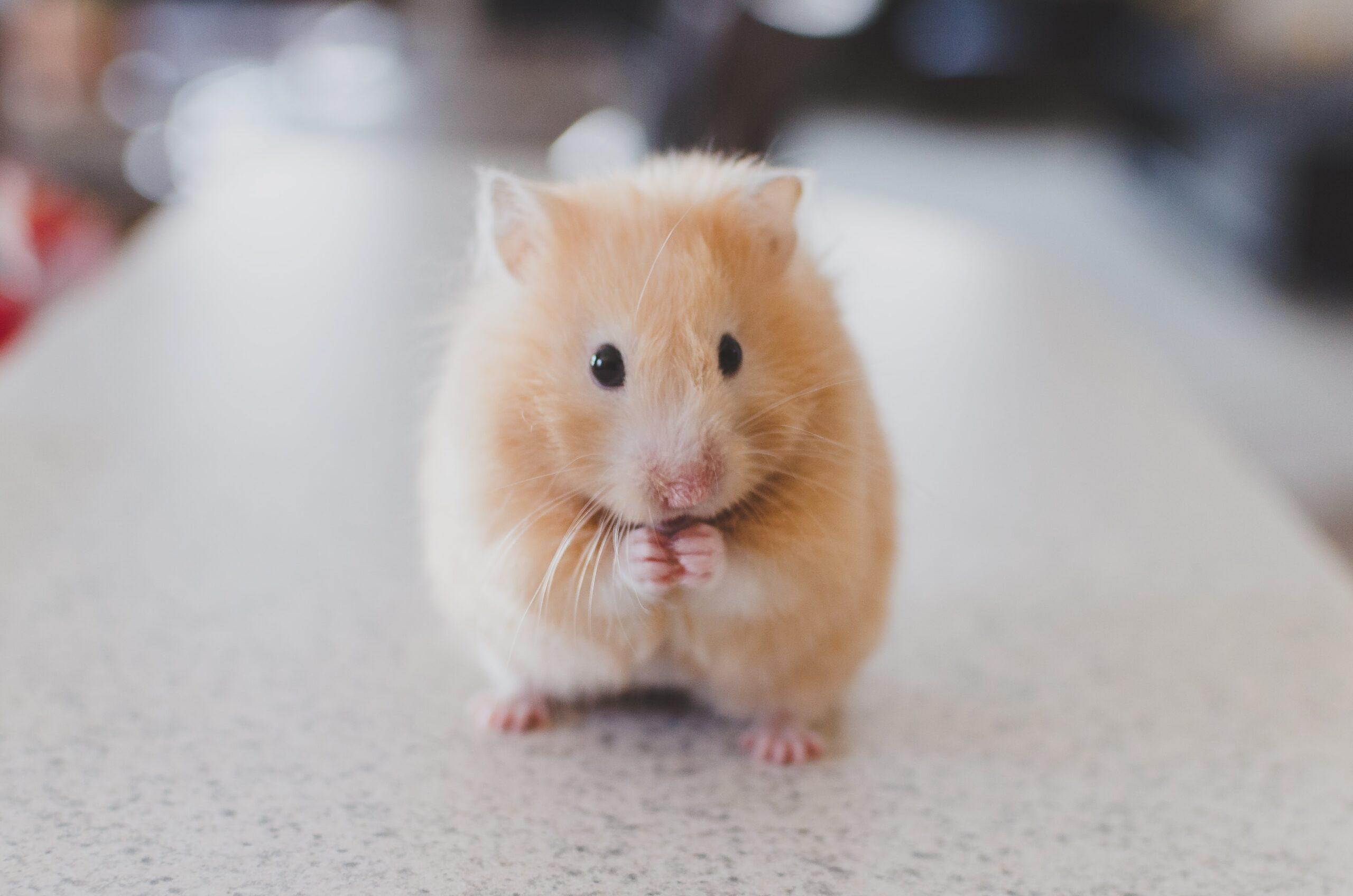 FDA Purchases 'Fresh' Aborted Babies From Criminal Organization To Create 'Humanized Mice'